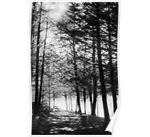 Sunlight through Grainy Trees Poster