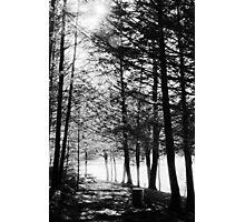 Sunlight through Grainy Trees Photographic Print