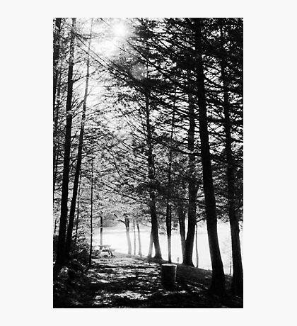 Sunlight through Grainy Trees Photographic Print