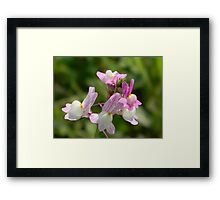 Easter Bunnies! Morroccan Toadflax - ESCAPEE! Framed Print