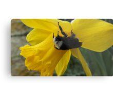 Cold Bumble Bee Metal Print