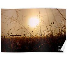 Sunshine on Misty Mornings Poster