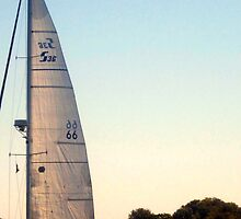Sail in the Early Sunset, Narragansett Bay, Rhode Island by Jane Neill-Hancock
