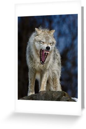 Angry like the wolf by Daniel  Parent