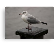 Seagull on Wooden Post Canvas Print