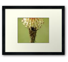 Bee on Red Hot Poker Framed Print