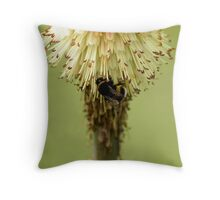 Bee on Red Hot Poker Throw Pillow