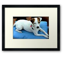 It's a Dogs life....to be PAMPERED!!!! Framed Print