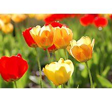 Spring has sprung! Photographic Print