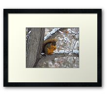 The Stare Down~ Framed Print