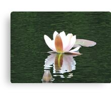 Never Be Afraid to Bloom & Shimmer Canvas Print
