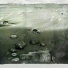 Low Tide by Ellen Cotton