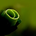 sweet green rose by lensbaby