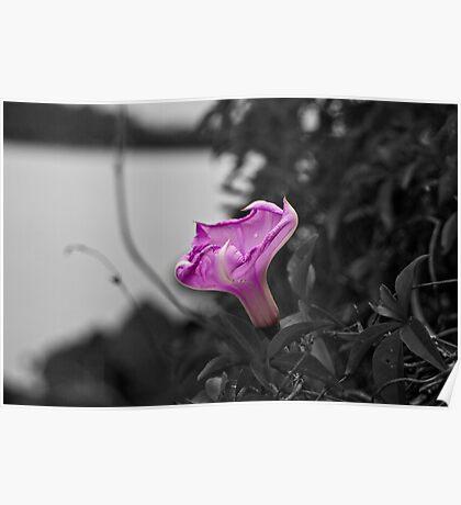 Popping Purple Flower Poster
