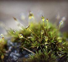 microscopic magic by Clare Colins