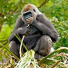 GORILLA SITTING ON TOP OF A TREE by TJ Baccari Photography