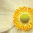 A touch of yellow by Anne Staub