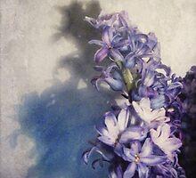 Hyacinth by Sybille Sterk