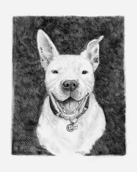 Stanley the Pit bull by Deanna Maxwell