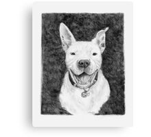Stanley the Pit bull Canvas Print