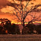 Junee Sunset by Phil Woodman