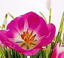 Frühjahrsfarben by Aviana