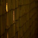 Bamboo Fence by Andy Merrett