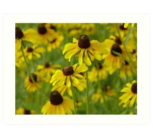 Yellow Coneflowers Art Print