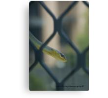 Smiling Green Tree Snake © Vicki Ferrari Canvas Print