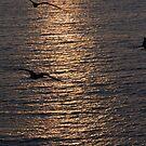 Reflections of the setting Sun with Frigate Birds - Reflecciones del Sol poniendose con Fregatas by PtoVallartaMex