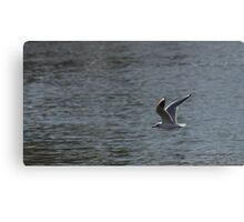 Gull Flying Over Water Canvas Print