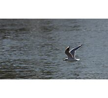 Gull Flying Over Water Photographic Print