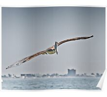 Pelican flying over the Gulf Poster