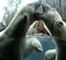 Polar Bears by tanahelene