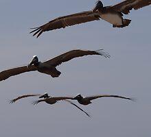 Pelican's Squadron - Flotilla De Pelicanos by Bernhard Matejka