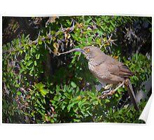 Springtime Nest Builder Poster