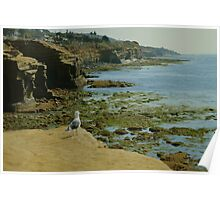 Just Looking Around ~ Sunset Cliffs, California, United States Poster
