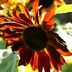 ARTFUL FLOWERS - SUNFLOWER by GeeGeeW