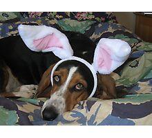 Luna bunny Photographic Print
