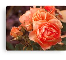 Smell of Roses Canvas Print
