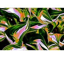 Fractalius Hosta Photographic Print