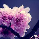 Bloom 1 by ANDREA SIDENSTRICKER
