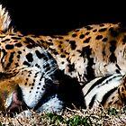 Jaguar  one by pcfyi