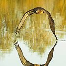 Reflections of a Red Tail Hawk by Linda Sparks