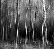 The Twisted Wood - Irwin Prairie Nature Preserve by Mitch Labuda