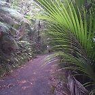 Walking through the Waitakere Ranges (image 3) by Joanna Rice