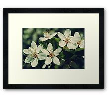 White Cherry Blossom Framed Print
