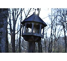 Bird House Light  Photographic Print