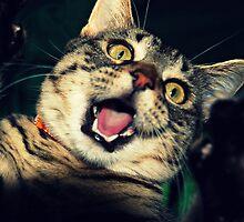 Roarrrr!!!! by jodi payne
