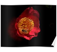 Camellia on Black Poster